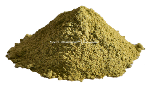 Dried Coriander Leaf Powder Suppliers and Exporters